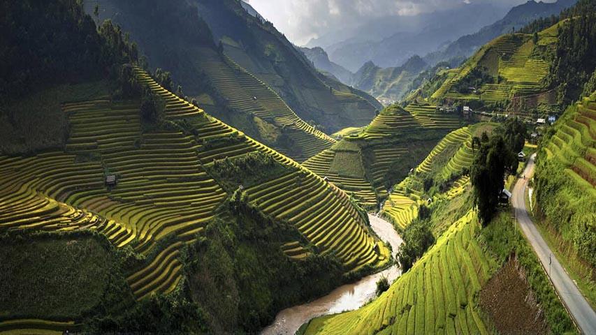 Rice paddies of Vietnam